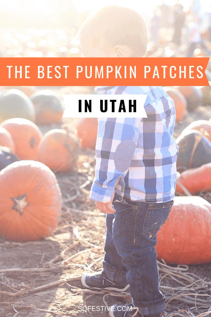 best-utah-pumpkin-patches