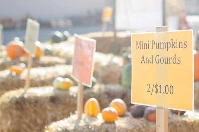 petersen-family-farm-pumpkin-patch