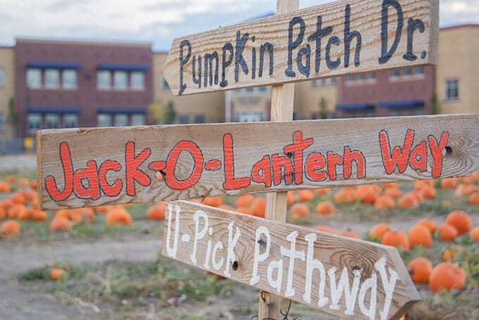 utah-pumpkin-patch
