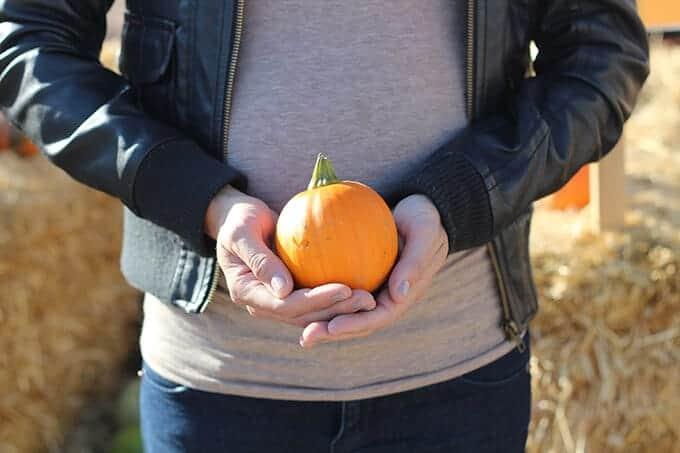 utah -pumpkin- patches