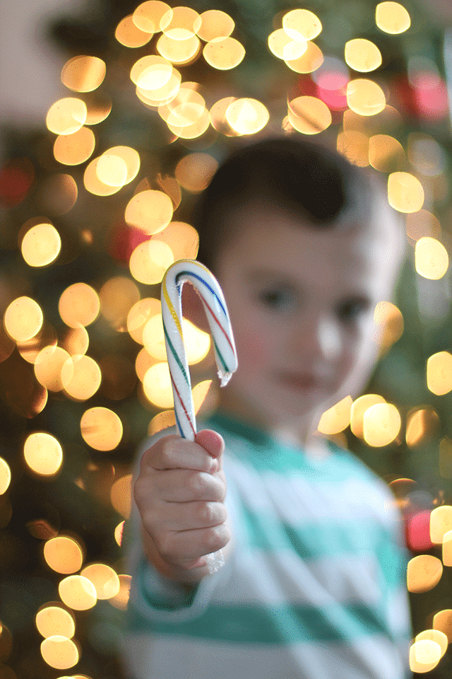 candy-cane christmas tree tradition